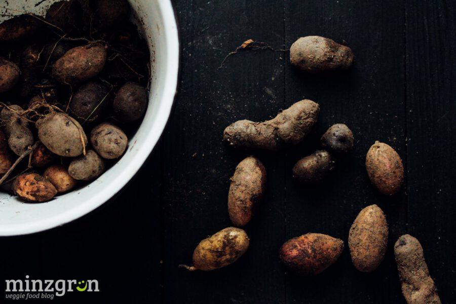Kartoffeln selbst anbauen (2)